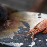 Einsame Krabbe im Hafen