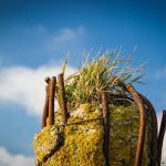 Betonpfahl auf Pellworm hat eine Kopfbedeckung aus Gras.