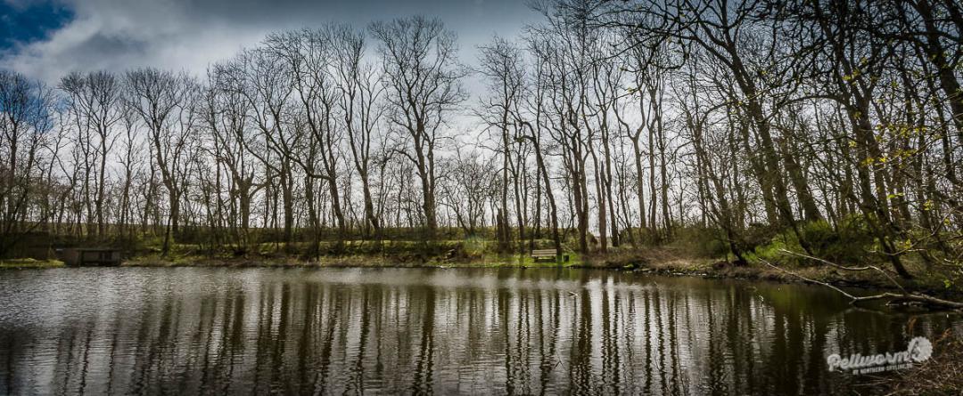 Frühlings-Spaziergang durch die Vogelkoje auf Pellworm