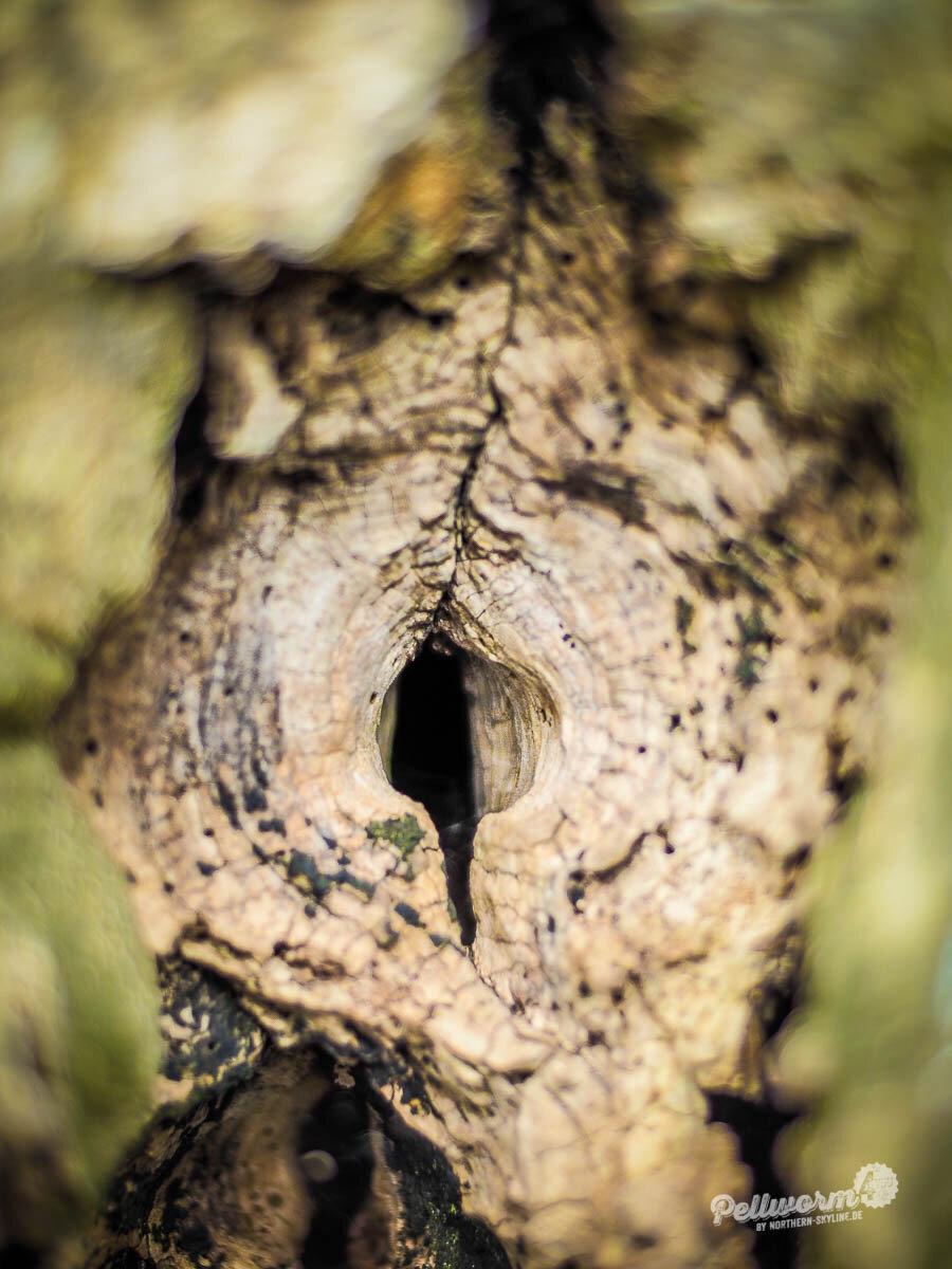 Vogelkoje auf Pellworm