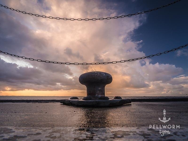 Poller am Pellwormer Tiefwasseranleger