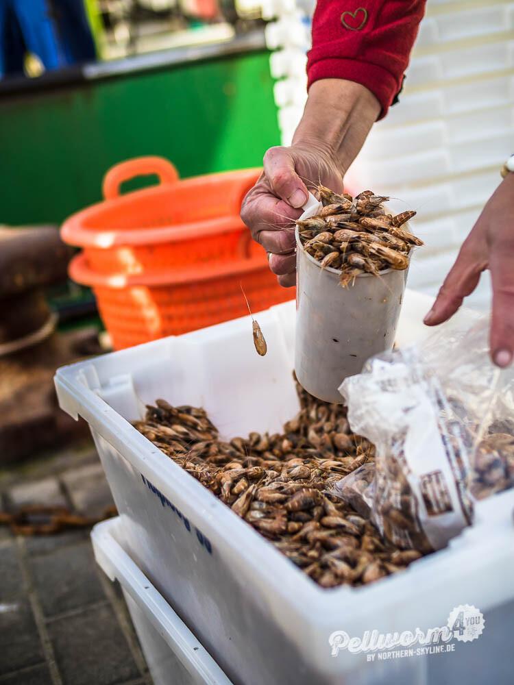 Die Krabben werden von Hand in Tüten abgefüllt.
