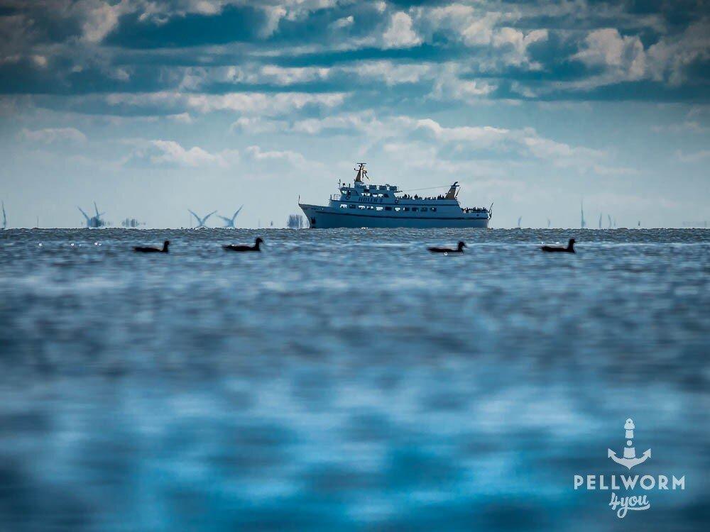 Das Ausflugsschiff Adler V vor Pellworm