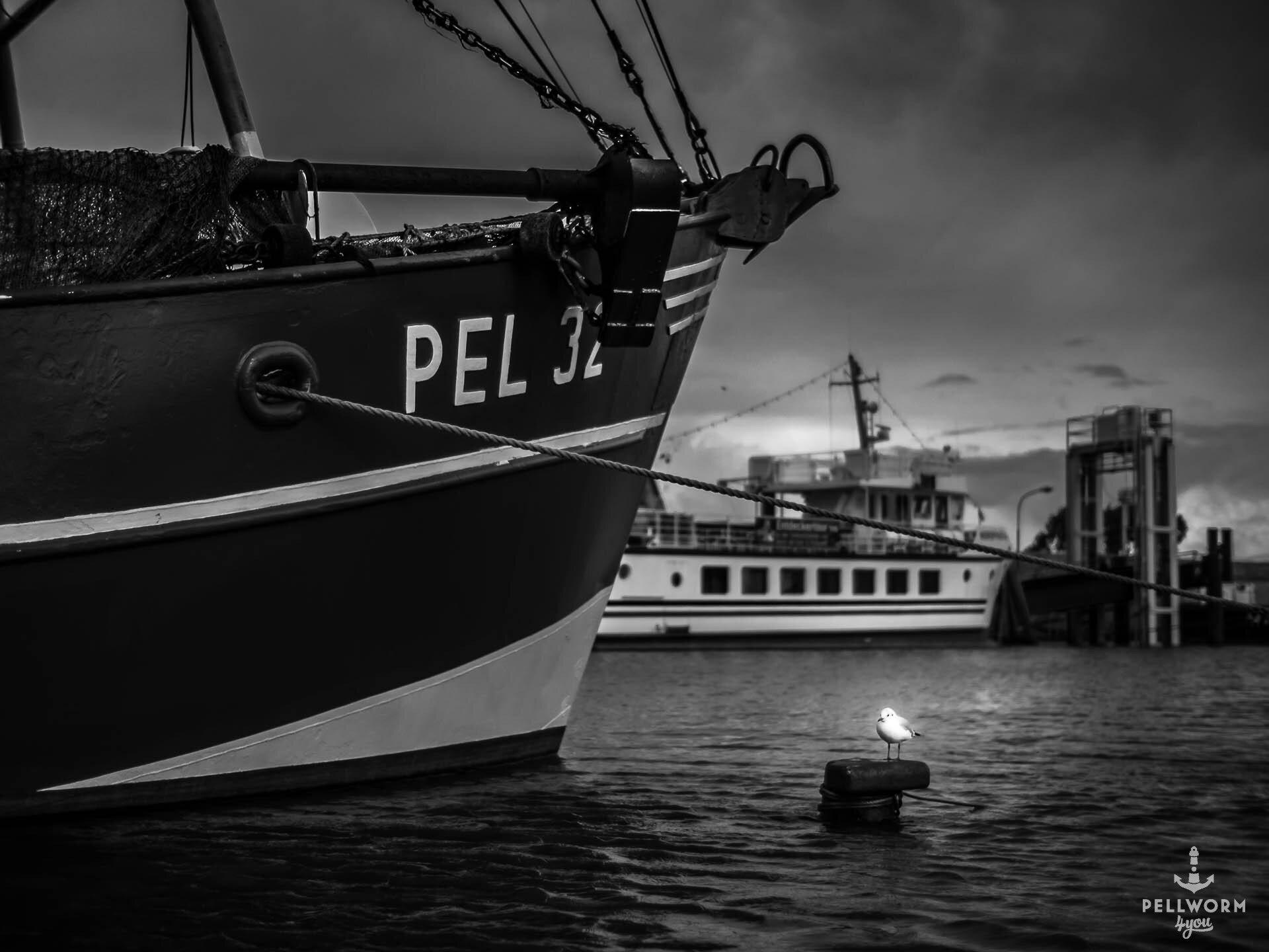 Eine Möwe sitzt im Pellwormer Hafen auf einem Poller