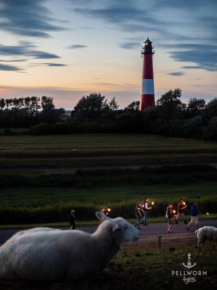 Ein Pellwormer Schaf schaut den Fackelwanderern am Leuchtturm hinterher