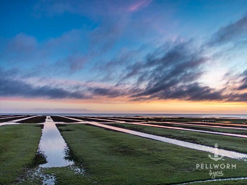 Salzwiesen an der Zufahrt zum Tiefwasseranleger auf Pellworm