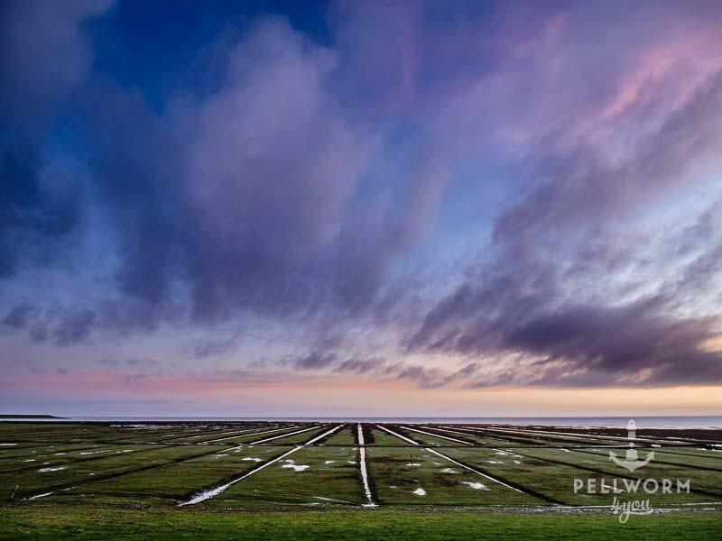 Tolles Farbenspiel bei Sonnenaufgang über den Pellwormer Salzwiesen