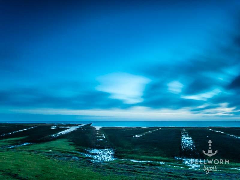 Salzwiesen auf Pellworm zur blauen Stunde am Morgen