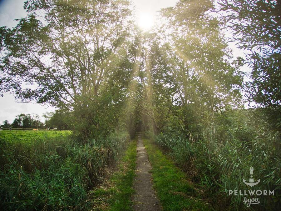 Der Fußweg zwischen Seegarden und Liliencronweg