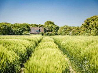 Landschaftsfotografie auf Pellworm ist oft Landwirtschaftsfotografie