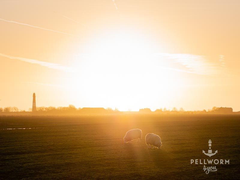 Goldene Wintersonne hinter dem Pellwormer Leuchtturm