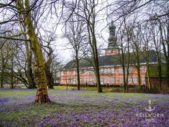 Auf dem Weg nach Pellworm (3) – Krokusblühte im Husumer Schlosspark